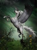 Alaca gri pegasus — Stok fotoğraf