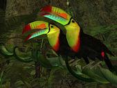 オオハシ ジャングル — ストック写真