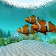 Clownfish — Stockfoto