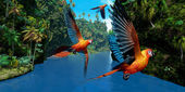 Cuban Red Macaw — Foto Stock