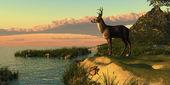 Deer Lake — Stockfoto
