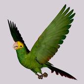 Double Yellow Amazon Parrot — Stock Photo