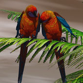 Parrot Tree — Stock Photo