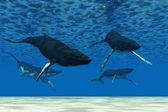 Observation des baleines nager — Photo