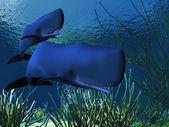 Sperm Whales — Stock Photo