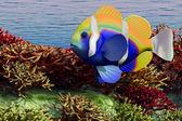 海の浅瀬 — ストック写真