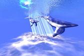 Modré velryby — Stock fotografie