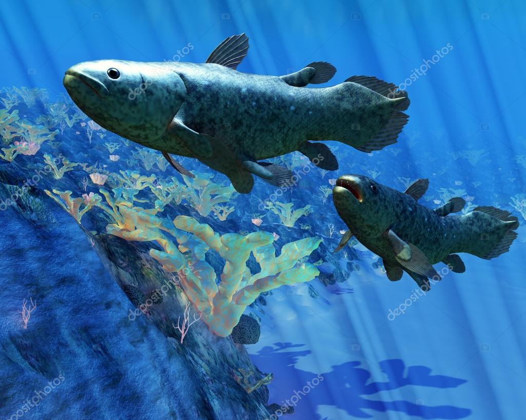 Латимерия рыбы — Стоковое фото © CoreyFord #30043607  Латимерия