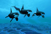 Whale World — Stock Photo