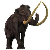 Woolly Mammoth on White — Stock Photo