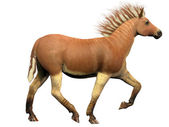Quagga Extinct Animal — Stock Photo