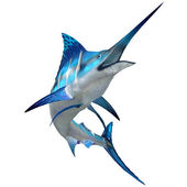 Marlin Fish on White — Stock Photo
