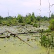 Swamp Habitat — Stock Photo