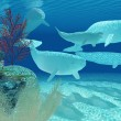 Beluga Whales — Stock Photo