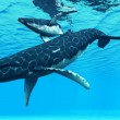 Humpback Mother and Calf — Stock Photo