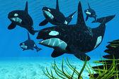 Ocean Killer Whales — Stock Photo