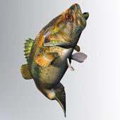 Largemouth Bass Strike — Fotografia Stock