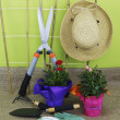 Garden Tools and Plants — Stock Photo