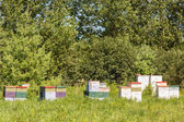 Beehives — Stock Photo