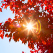 Stock Photo: Sunshine through Autumn Leaves
