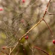 Spider Web — Stock Photo #36253245