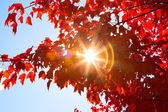 Sunshine through Autumn Leaves — Stock Photo