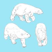 Set of linear drawing polar bears — Stock Vector