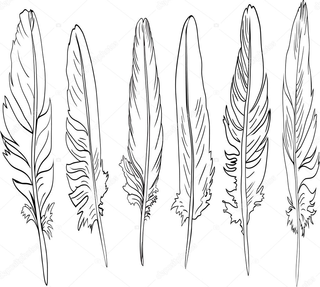 Six outline feathers — Stock Vector #29376207