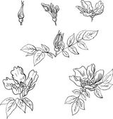 Set of linear drawing flowers from sweet briar — Wektor stockowy