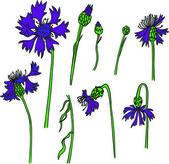 Set of line drawing cornflowers — Stock Vector