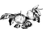Ink drawing fruits — Stock Vector