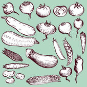 Set of vintage vegetables — Stock Vector