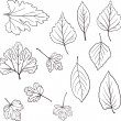 Stock Vector: Set of linear drawing leaves