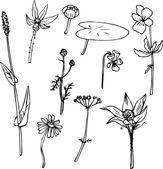 组的线描草药 — 图库矢量图片