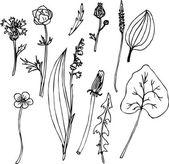 Jeu de dessin au trait herbes — Vecteur
