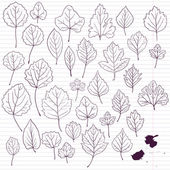 Set of linear drawing leaves at lined paper — Cтоковый вектор