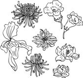 Set of line drawing flowers — Stock Vector