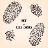 Set of pine cones — Stock Vector
