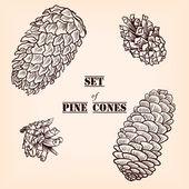 Set of pine cones — Wektor stockowy