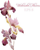 Irises drawing by watercolor — Vetorial Stock