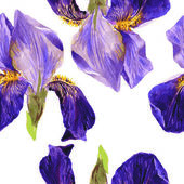 Vector seamless pattern with irises — Stok Vektör