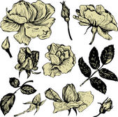 Vintage vector floral set — Stock Vector