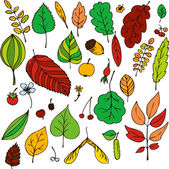 Vector set of leaves — Stock Vector
