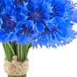Vivid blue flowers of cornflower — Stock Photo
