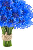 Vivid blue flowers of cornflower — Stock Photo