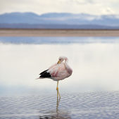 Flamingo — Stockfoto