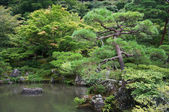 Elements of traditional Japanese garden — Stock Photo
