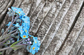 Bunch of blue forget me not flower — Stock Photo