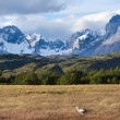 Stock Photo: Torres del Paine national park