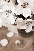 Apple tree flowers processed in a vintage sepia color — 图库照片